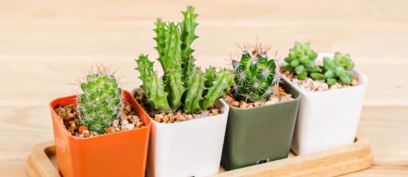 Handmade planter is perfect for plants that require little to no water, such as cacti